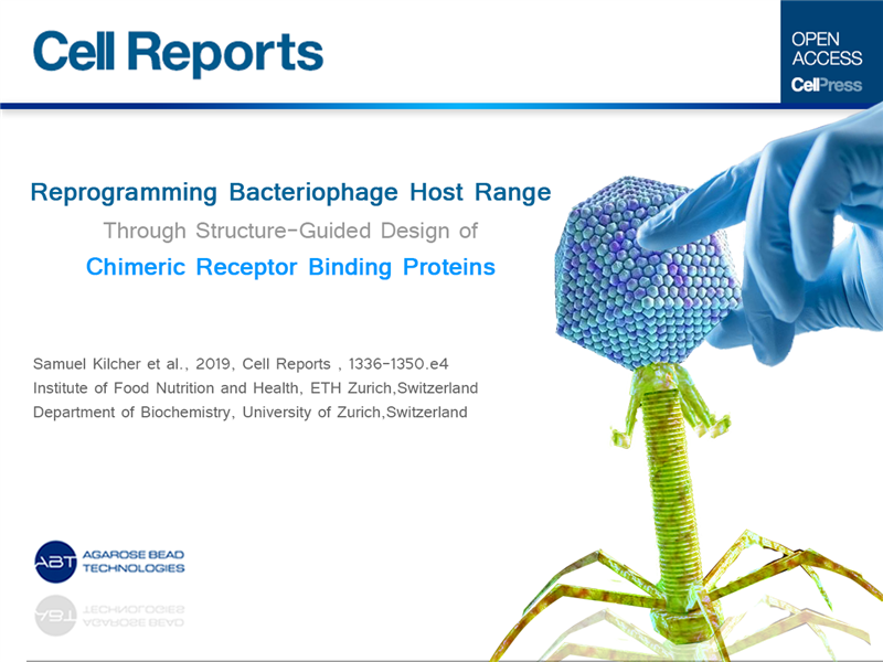 Reprogramming Bacteriophage Host Range through Structure-Guided Design of Chimeric Receptor Binding Proteins